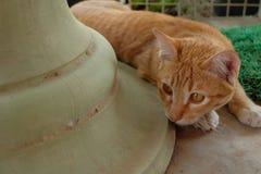 Cache-cache de jeu de chat Photographie stock libre de droits