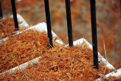 Cache d'échelle de Parc avec des leves d'automne photo stock