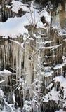 Cache de l'hiver Photographie stock libre de droits