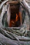 Cache de vieux temple par l'arbre de Root, Thaïlande Photographie stock