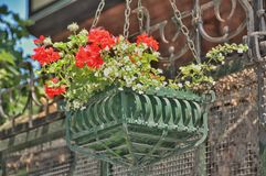 Cache-pot with flowers. Petunia Royalty Free Stock Photography