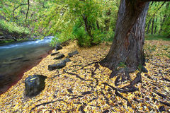 Cache River Utah in the fall Stock Photography