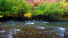 Cache River Utah Fall Scenery stock video footage
