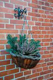 Cachepot or flowerpot on red brick wall. Cachepot or flowerpot with flowers and green spruce branches on red brick wall background. Gardening, decoration, home stock images