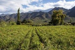 Cachi Adentro in Salta, Argentina del Nord immagini stock