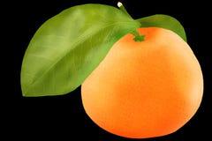 Cachi isolato Una frutta del cachi sopra i wi bianchi del fondo Fotografie Stock Libere da Diritti