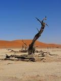 Cacho em Deadveli, Namíbia foto de stock royalty free