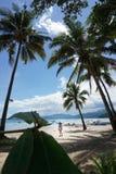Cacho palawan do coco de Coron Filipinas Fotografia de Stock