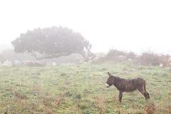 Cacho Windswept na névoa imagens de stock royalty free