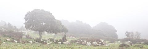 Cacho Windswept na névoa fotos de stock