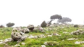 Cacho Windswept na névoa fotografia de stock