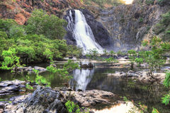 A cachoeira australiana Bloomfield cai, Queensland norte, Austral Fotografia de Stock