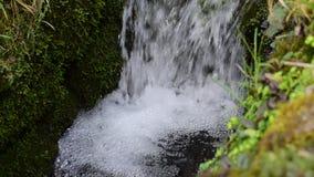 Cachoeira & birdsong filme