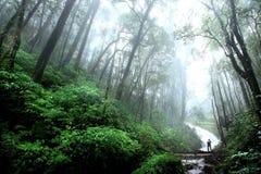 Cachoeira bonita com névoa na floresta úmida, Chiang Mai, Thailan Foto de Stock