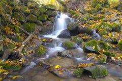 Cachoeira bonita da cascata na floresta do outono fotografia de stock