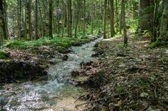 Cachoeira bonita de Oltschibach, Unterbach, a municipalidade de Brienz Fotografia de Stock