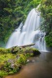 Cachoeira bonita do seaw do dok do Pa de chaing MAI, Tailândia Imagens de Stock Royalty Free