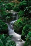 A cachoeira bonita na floresta Fotos de Stock