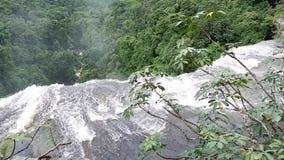 Cachoeira a cachoeira da floresta úmida da selva video estoque