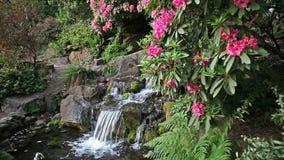 Cachoeira com as flores do rododendro que florescem na mola