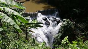 Cachoeira da cascata com folhas de palmeira na frente de vídeos de arquivo