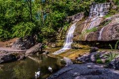 A cachoeira da cascata no parque dendrological hardsarpened imagem de stock royalty free
