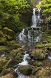 Cachoeira da costa leste Fotos de Stock
