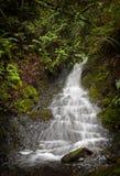 Cachoeira da floresta úmida Foto de Stock Royalty Free
