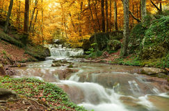 Cachoeira da floresta Imagens de Stock Royalty Free