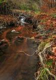 Cachoeira da floresta da montagem Imagens de Stock