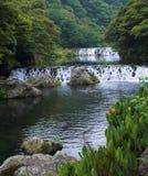 Cachoeira da floresta da montanha com a flor alaranjada em rochas Imagem de Stock Royalty Free