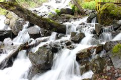 Cachoeira da leiteria Fotos de Stock Royalty Free