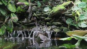 Cachoeira da paisagem no plano geral da selva filme