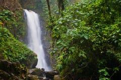 Cachoeira da selva Imagens de Stock