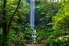 Cachoeira da selva Imagens de Stock Royalty Free