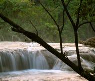 Cachoeira de Cascadas de Agua Azul Fotografia de Stock