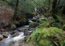 Cachoeira de conexão em cascata da garganta de Uvas fotografia de stock royalty free