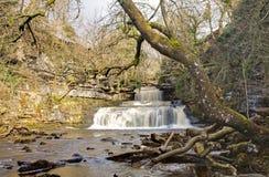 Cachoeira de Cotterforce Fotografia de Stock Royalty Free