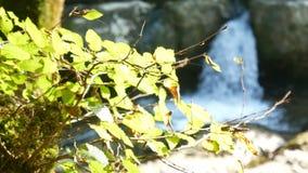Cachoeira de Green River da natureza filme