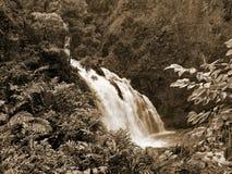 Cachoeira de Maui fotos de stock