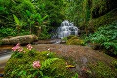 A cachoeira de Mun-Dang com flor do boca-de-lobo Fotos de Stock