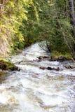 Cachoeira de pressa com grama luxúria em Rocky Mountain National Park imagens de stock royalty free
