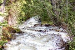 Cachoeira de pressa com grama luxúria em Rocky Mountain National Park fotografia de stock