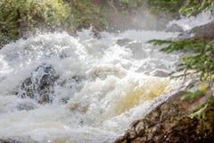 Cachoeira de pressa com grama luxúria em Rocky Mountain National Park fotos de stock
