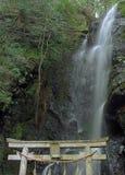 Cachoeira do azevinho imagem de stock