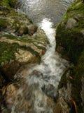 Cachoeira do córrego da floresta Imagens de Stock Royalty Free