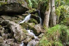 Cachoeira do córrego da montanha Fotos de Stock