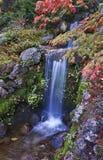 Cachoeira do outono Fotos de Stock