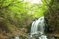 Cachoeira do verde fresco Fotos de Stock Royalty Free