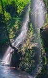 Cachoeira e árvore, luz verde Imagem de Stock